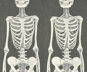 beautiful, bones, and same image