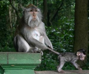 funny, cute, and monkey image