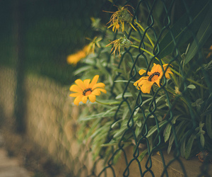 flowers, indie, and photography image