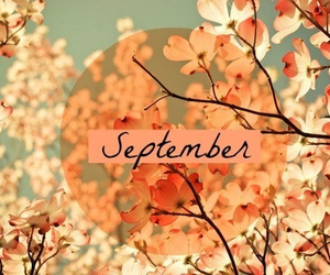 flowers, September, and autumn image