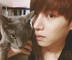 cat, superjunior, and heechul image
