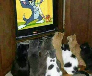 cat, funny, and tv image