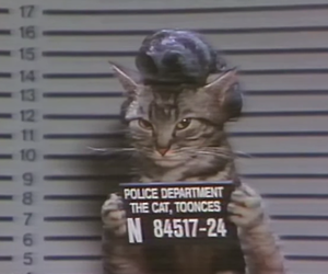 cat, jail, and police image