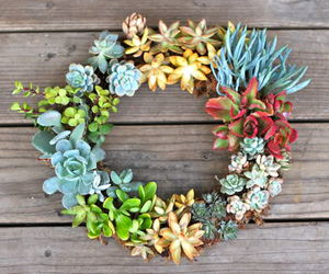 garden, succulent, and living image