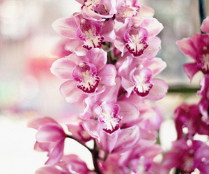 flowers, orchid, and pink image