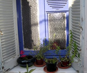 blue, plants, and Greece image