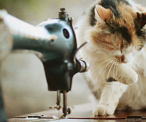 cat, vintage, and cute image