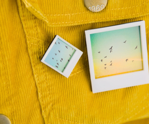 photography, pins, and polaroids image