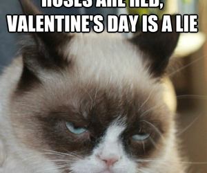 Valentine's Day, cat, and funny image