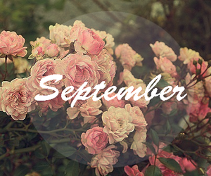September, roses, and autumn image