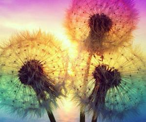colors and dandelion image