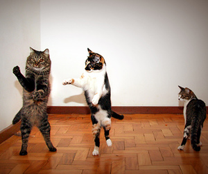 cat, dance, and cute image
