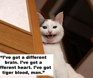 cat, charlie sheen, and lol image