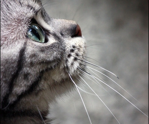 animal, cat, and photography image