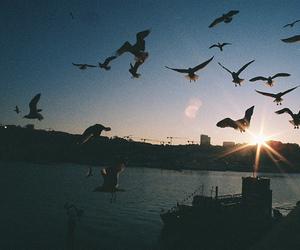 bird, vintage, and sky image