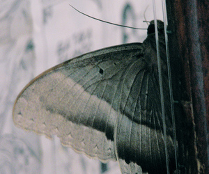 butterfly, insect, and window image