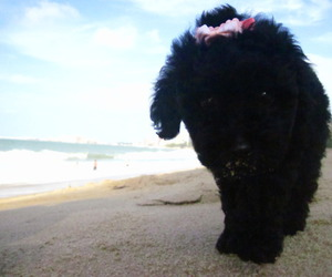 beach, black, and dog image