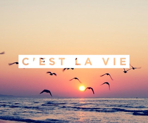 beach, cest la vie, and french image