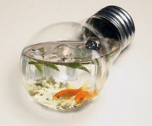 fish, cool, and water image