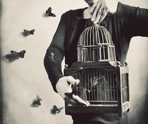 butterfly, cage, and vintage image