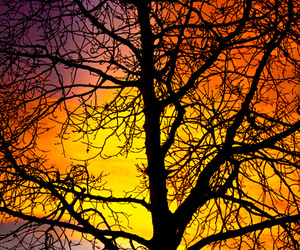tree, sunset, and colorful image