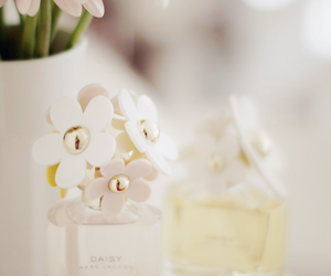 daisy, flowers, and perfume image