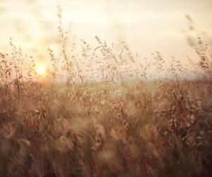 beautiful, sun, and sunrise image