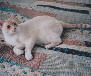 35mm, cat, and quilt image