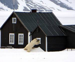 house, Polar Bear, and norway image