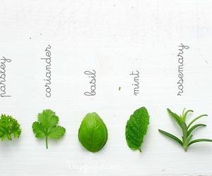 food, herbs, and plants image