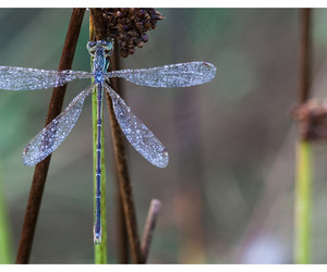 beautiful, blue, and insect image
