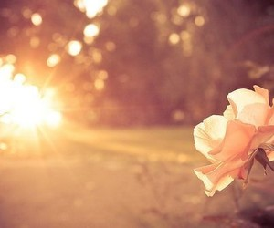 flowers, sun, and rose image