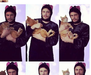 actor, cats, and james franco image