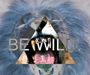 wild, lion, and be wild image