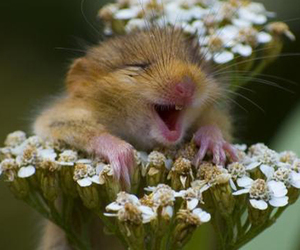 flower, mouse, and cute image