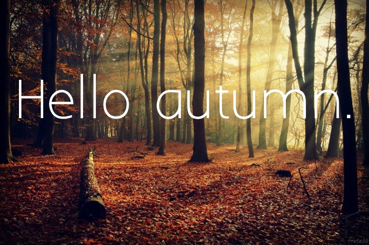 autumn, hello, and forest image