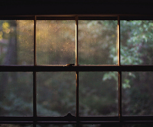 window, light, and nature image