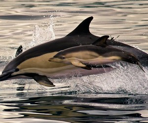 animals and dolphin image