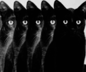 cat, black, and hipster image