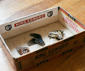 butterfly, vintage, and box image