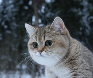 cute and the most awesome cat image