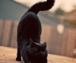 adorable, cat, and cool image