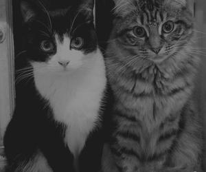 black&white, cat, and miau image
