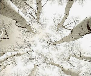 tree, photography, and white image