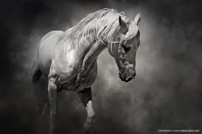 Black and white horse 54ka photo blog on we heart it