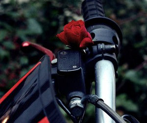 red, rose, and derbi senda image