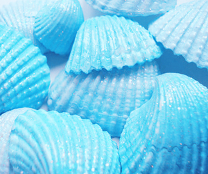 blue, shell, and seashells image