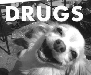 drugs, dog, and funny image