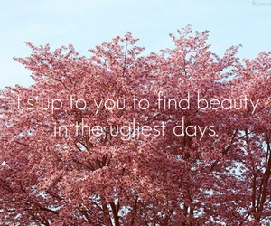 beauty, typography, and quote image