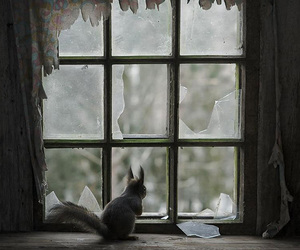 squirrel, window, and animal image
